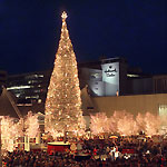 Crown_center_tree
